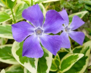 Растения от давления