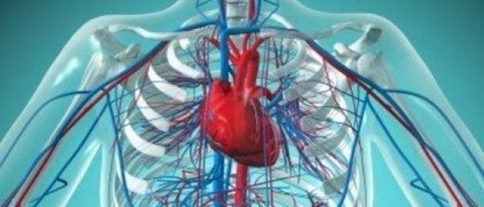 Причины и лечение эссенциальной гипертензии