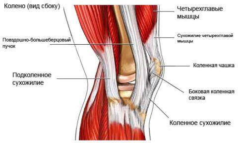 Колени человека имеют достаточно сложное строение и выдерживают большую нагрузку в течение жизни, поэтому они часто травмируются и предрасположены к ряду недугов.