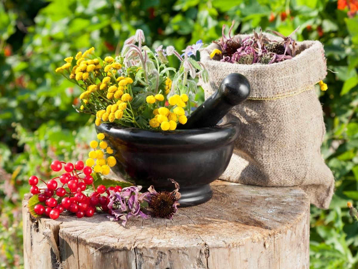 Отвар из сбора лекарственных растений