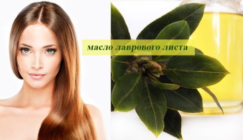 Лавровое масло поможет справиться с суставными недугами и улучшить состояние волос.