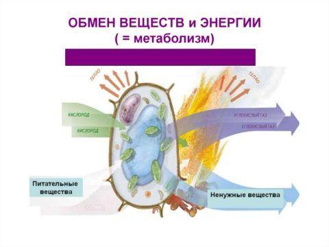 Нарушение обменных процессов нарушает нормальное кровоснабжение и трофику суставных тканей.