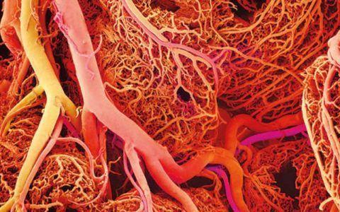 Нарушении нормального кровообращения обязательно скажется на состоянии сочленений.
