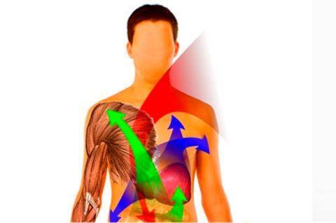 Нарушения обменных процессов влияют на трофику суставных тканей и приводят к изменениям в сочленениях.