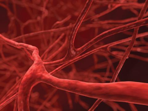 Нормальное кровообращение в суставных тканях – залог их хорошего функционирования.