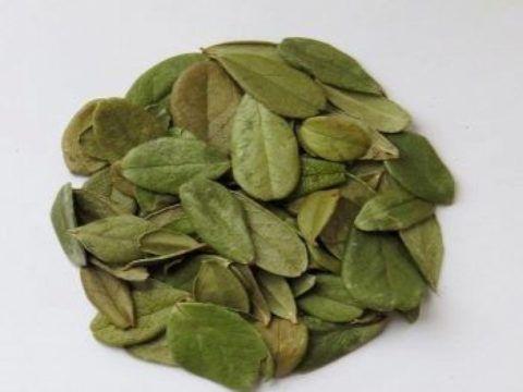 Отвар листьев брусники поможет справиться с воспалительными процессами в суставах.