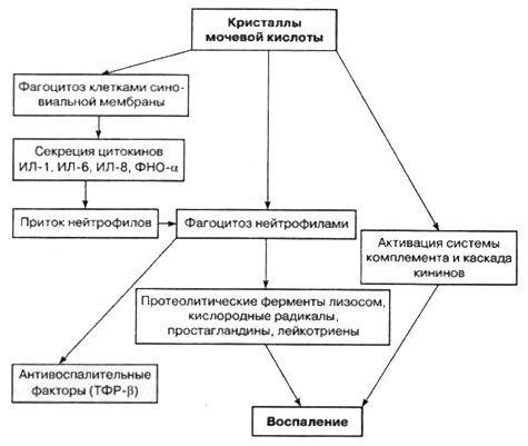 Патогенез подагрического артрита
