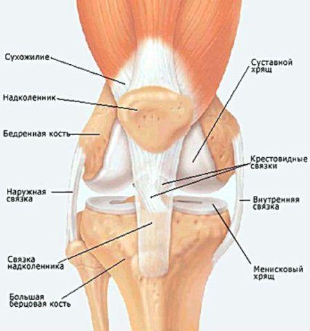Связки, которые могут повредиться при травмировании, поражении инфекцией или воспалительном процессе.