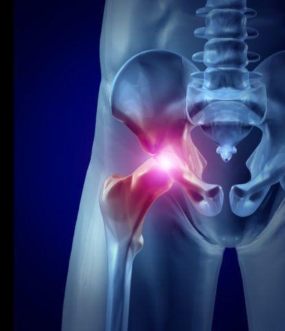 Крупнейший сустав выполняет опорную и двигательную функции