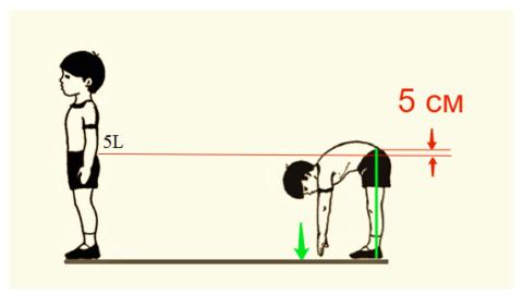 Тест на подвижность позвоночника в поясничном отделе