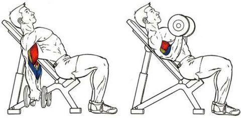Упражнения с гантелями на бицепс