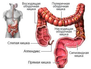 Увеличивается давление в толстом кишечнике