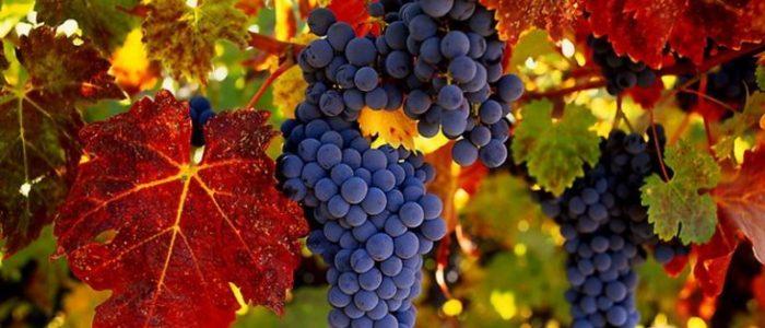 Артериальное давление и виноград